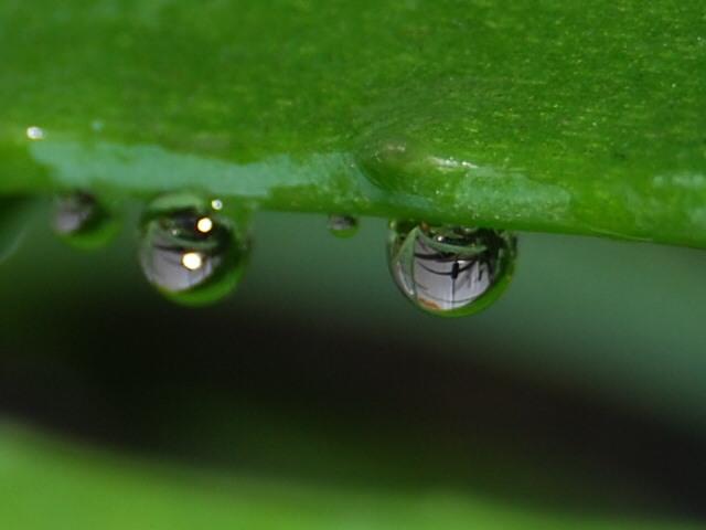 Алое Вера - выводит токсины и шлаки, очищает кровь и лимфу.