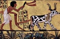 Древний Египет - Целебные косметические свойства алоэ, целебных свойствах алоэ, вылечить от болезней